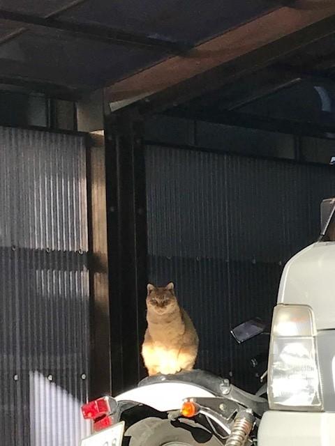残置物 招き猫 マスコット ネコ